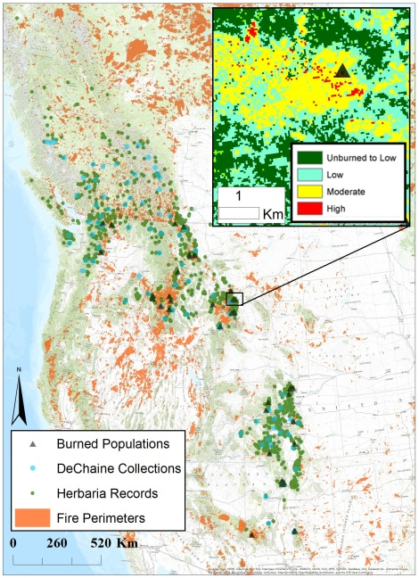 The distribution of S. austromontana. Fire perimeter data from MTBS was used to locate populations that have burned over since 1984-2014. In my field study burned sites (black triangles) will be paired with unburned sites (green dots) to assess the impact of wildfire on the species. Existing collections by the DeChaine lab are also shown (blue dots).